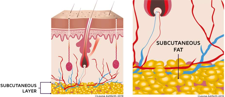subcutaneous-layer-of-skin